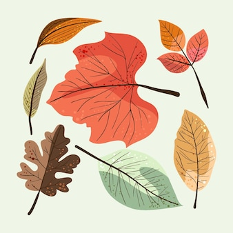Detailed autumn leaves collection