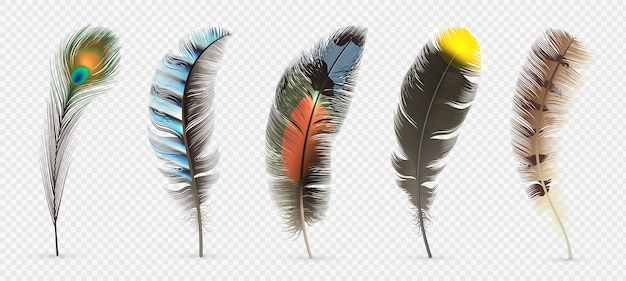 Detailed colorful feathers set