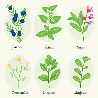 Detailed essential oil herb collection