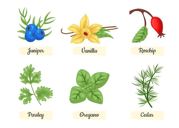 Detailed essential oil herb set