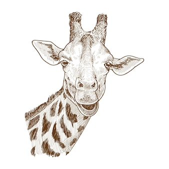 Detailed giraffe drawing