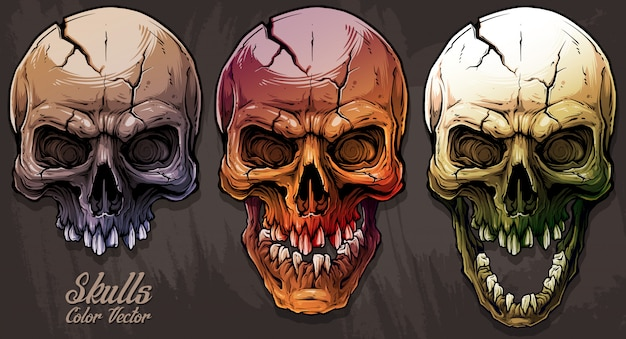 Detailed graphic colorful human skulls set