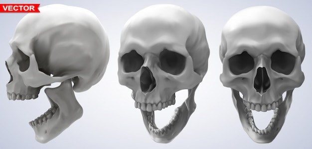 Detailed graphic photorealistic human skulls set
