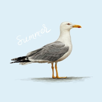 Detailed illustration of seagull