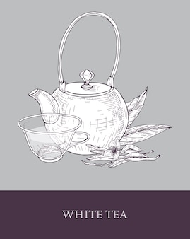 Detailed monochrome drawing of teapot, transparent glass cup of white tea, flowers and leaves on gray