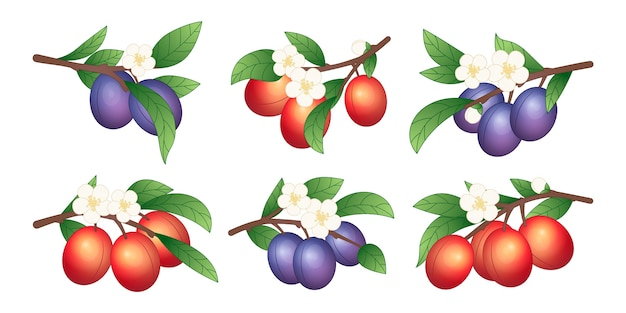 Detailed plum fruit and flowers illustration