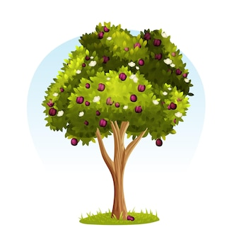 Detailed plum tree illustration