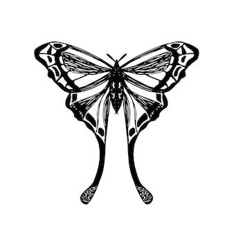 이국적인 나방의 자세한 스케치. 열 대 나비 흰색 절연입니다. 벡터 손으로 날개를 가진 곤충의 그려진 된 그림. 포장, 라벨, 로고, 아이콘 디자인 요소.