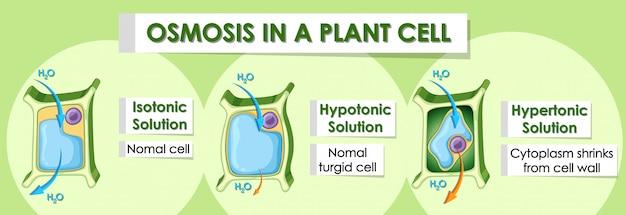 식물 세포의 세부 사항을 보여주는 다이어그램 배너