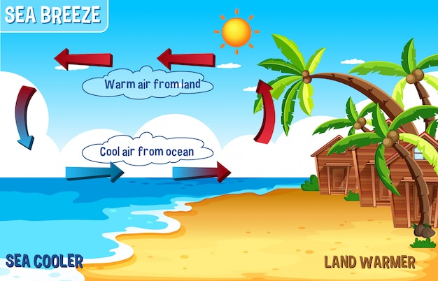 Diagram of sea breeze with land and water
