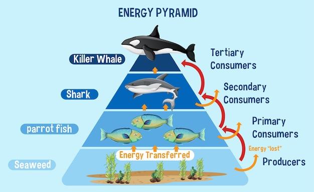 교육용 북극 에너지 피라미드를 보여주는 다이어그램