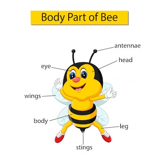 Diagram showing body part of bee