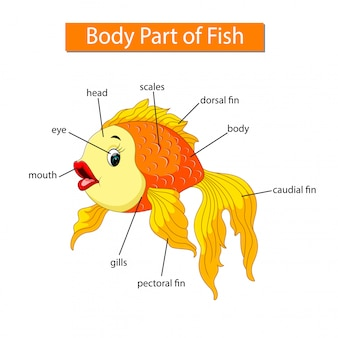 Diagram showing body part of fish