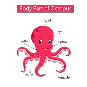 Diagram showing body part of octopus