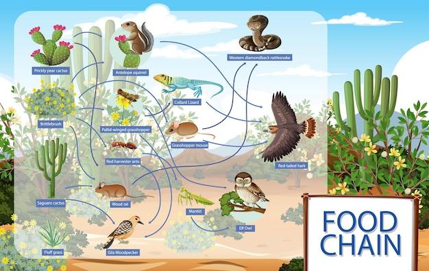 Диаграмма, показывающая пищевую цепочку пустынных животных
