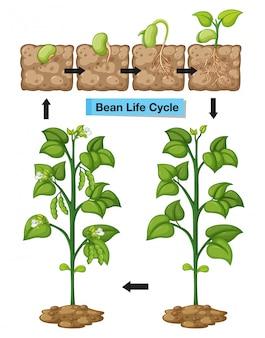 Диаграмма, показывающая жизненный цикл компонента