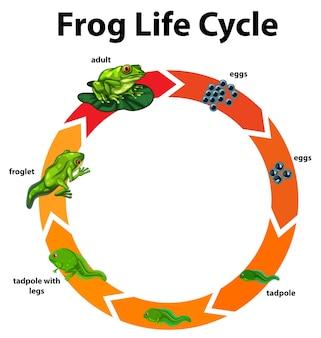 개구리의 수명주기를 보여주는 다이어그램