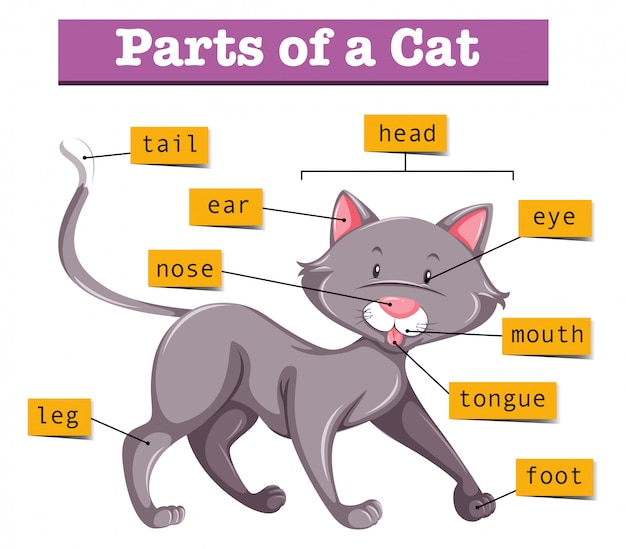 Diagram showing parts of cat
