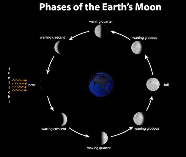 Diagram showing phases of the earth's moon