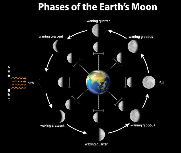 Diagram showing phases of the moon on earth