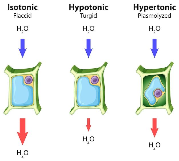 チャート上の植物細胞を示す図
