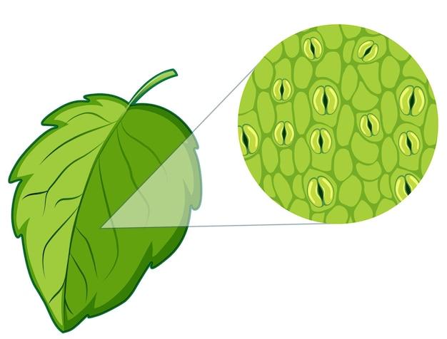식물 세포를 보여주는 다이어그램