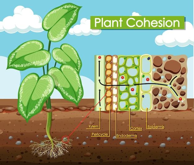 植物の凝集を示す図