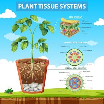 植物組織システムを示す図