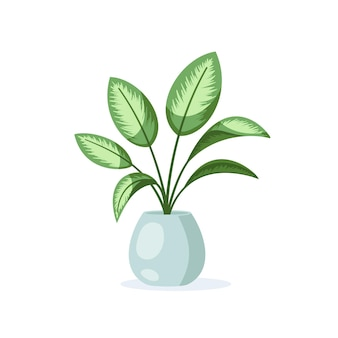 Dieffenbachia home plant in flower pot isolated on white background in flat style