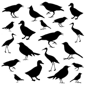Different birds icons silhouettes isolated