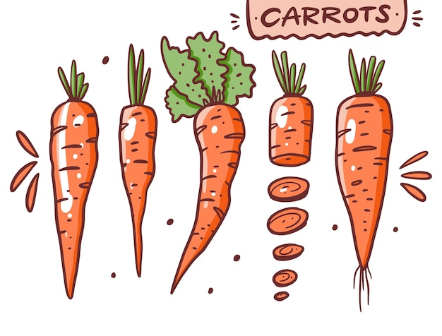 Набор различных моркови. рука рисовать векторные иллюстрации. мультяшный стиль. изолированные на белом фоне.
