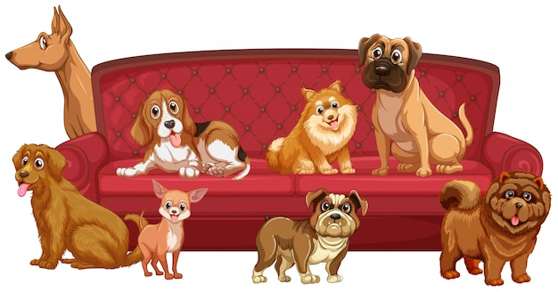 Different dog breeds at sofa