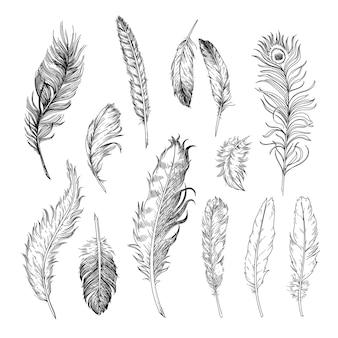 Set di illustrazioni incise di piume diverse di uccelli.