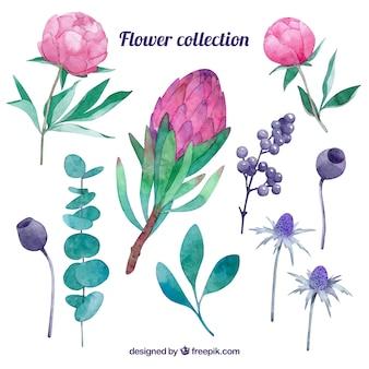 Коллекция различных цветов в акварельном стиле