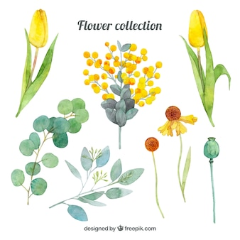 Different flowers collection in watercolor style