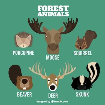 Различные лесные животные в плоском стиле