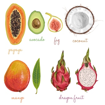 Different fruits painted with watercolors
