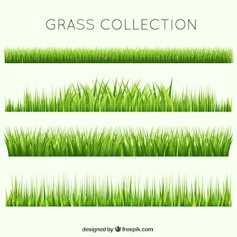 Different garden grass collection