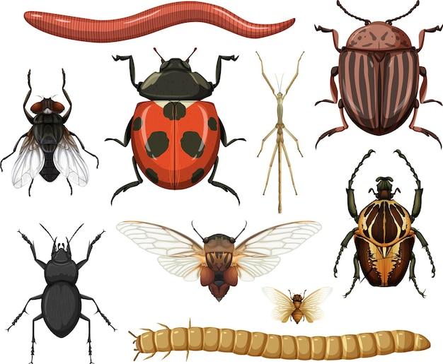 흰색 배경에 고립 된 다른 곤충 컬렉션