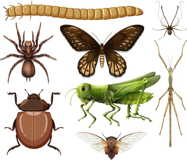 Different insects collection isolated on white background