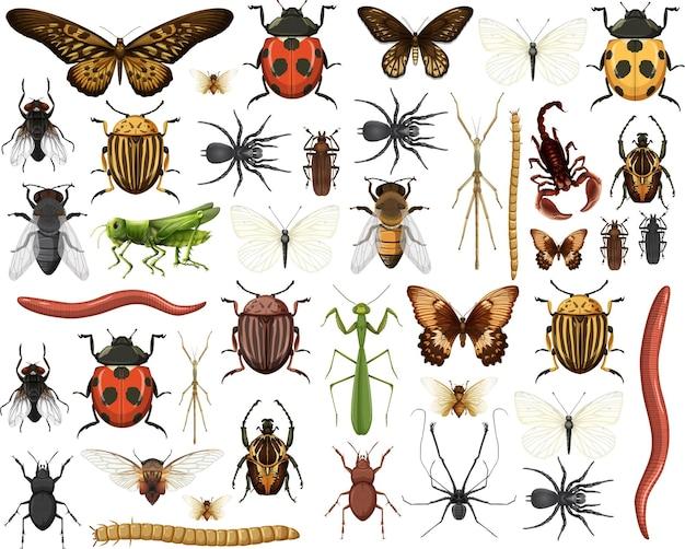 Raccolta di insetti diversi isolati su sfondo bianco
