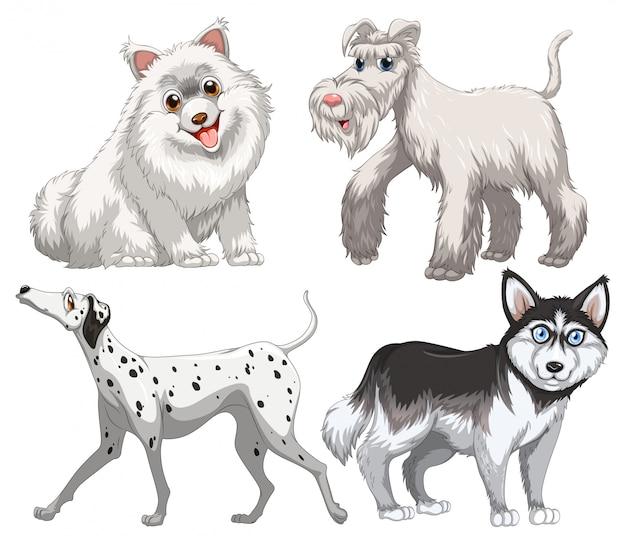 Различные виды собак