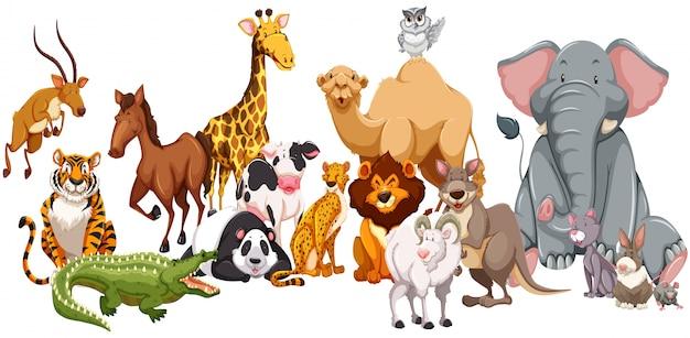 異なる種類の野生動物