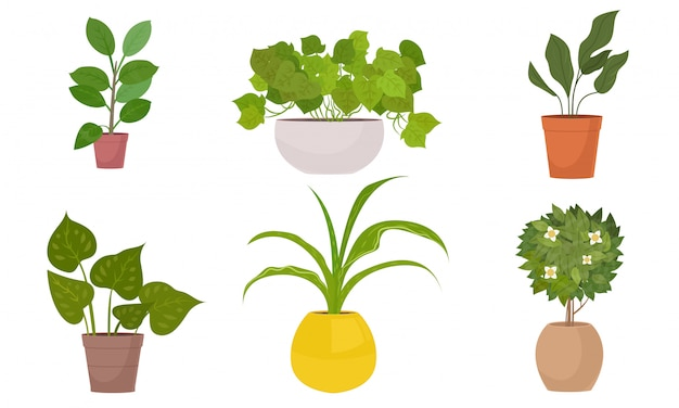 Different kinds of green home plants in pots vector illustration