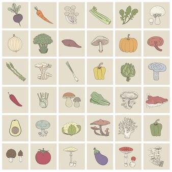 다른 종류의 야채