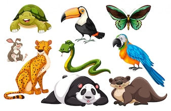 Different kinds of wild animals illustration