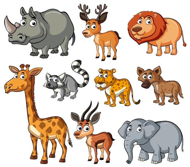 Различные виды диких животных