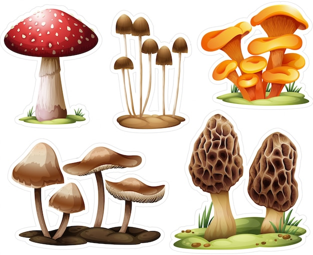 Different mushrooms collection
