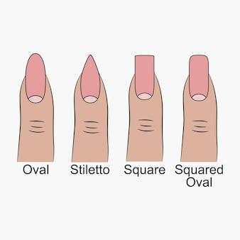 さまざまな爪の形。マニキュア用の爪の形。ベクトルイラスト。