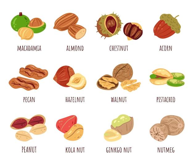 Набор изолированных элементов дизайна различных орехов
